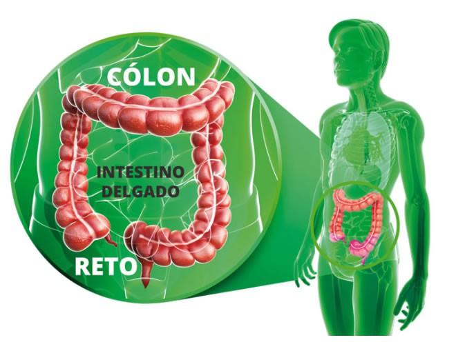 Setembro Verde - Câncer de cólon e reto (intestino)